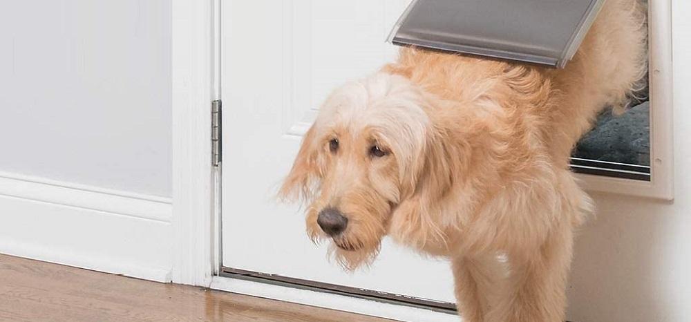 pet smart dog doors