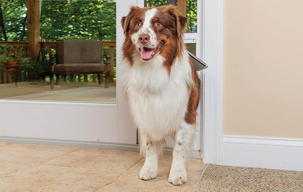 smart doggie doors